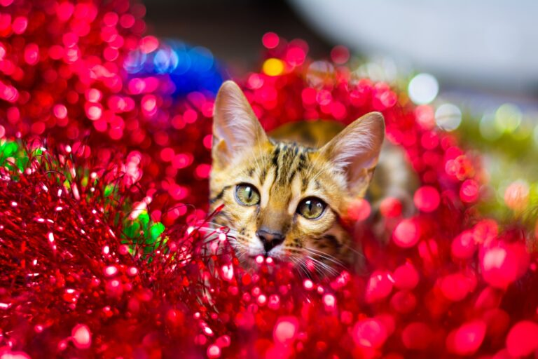 cat watches magic through Christmas ornaments